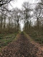 Shenley Woods, dark and deep