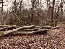 Fallen and stump