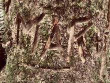 Who is MAK?
